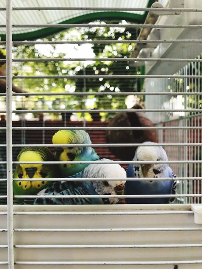Animal Themes Bird Day Mammal Outdoors Togetherness Domestic Animals Real People Large Group Of Animals Close-up