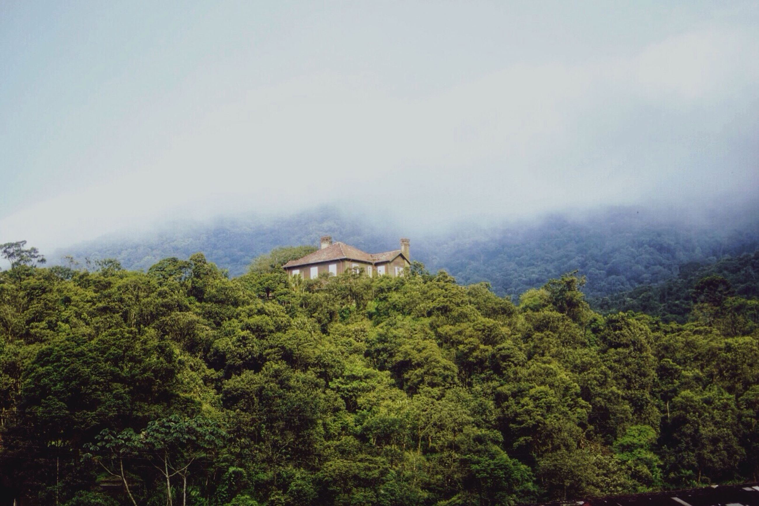 tree, green color, sky, growth, fog, nature, tranquility, beauty in nature, built structure, lush foliage, tranquil scene, scenics, architecture, weather, building exterior, house, mountain, forest, day, non-urban scene