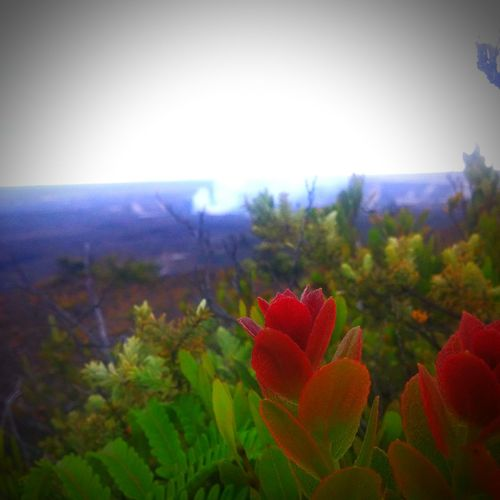 Peles House Nature Photography Natural Beauty Love My Island ❤ Big Island Love Lava Lover MelLy12