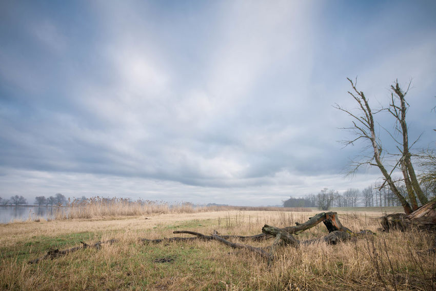 an der Oder Bare Tree Beauty In Nature Cloud - Sky Day Field Grass Landscape Nature No People Outdoors Sky Tranquil Scene Tranquility Tree