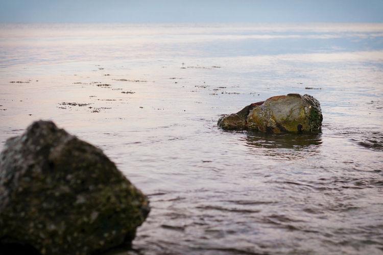 Beauty In Nature Evening Evening Sea Nature Pearl Rock Rocks Sea Seaweed Water