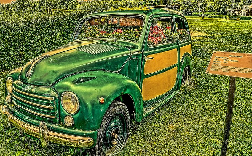 Bj.1954 Brückenkopf-Zoo Car Fiat Topolino GERMANY🇩🇪DEUTSCHERLAND@ Hdrphotography Land Vehicle No People Outdoors Transportation