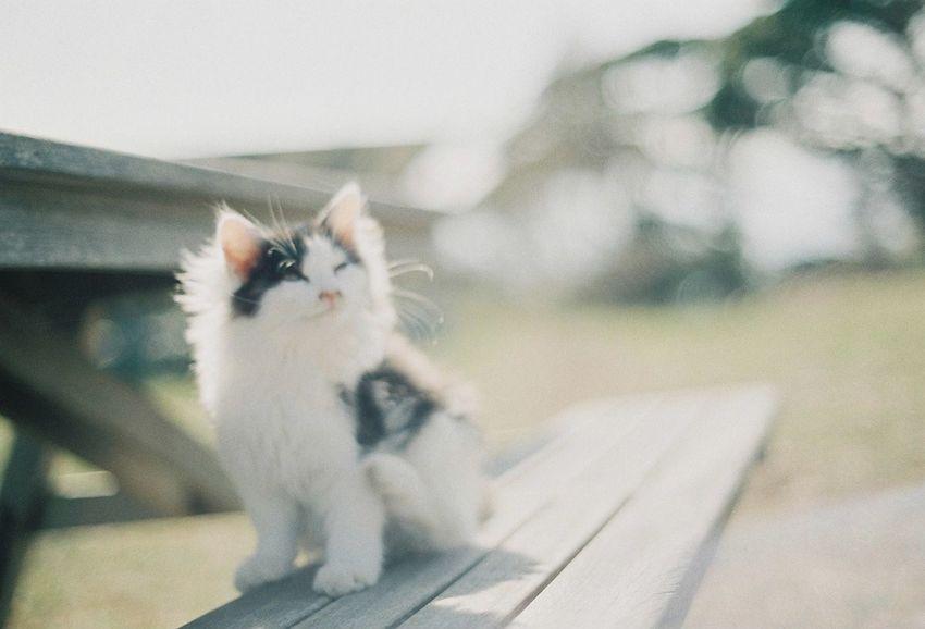 Photo Olympus OM-1 35mm Film Film Cat Japan