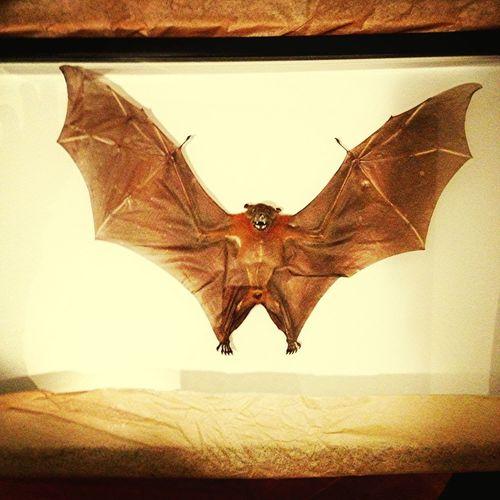 Buffass Bat!!!
