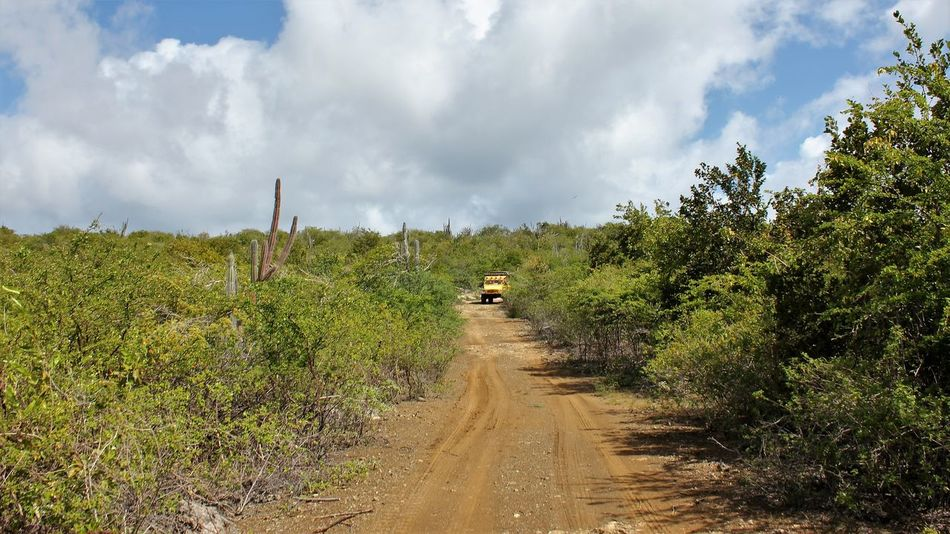 BigFoot Tours on Bonaire 2013 4x4 4x4 Driving 4x4 Off-road Team 4x4 Travel 4x4 Trucks 4x4ing 4x4wd Bonaire Bonaire Netherlands Antilles Beautiful Bonaire Beauty In Nature Bigfoot Tours Bonaire Bonaire Landscape Cloud - Sky Day Nature No People Outdoors Plant Scenics Sky The Way Forward Tree Unimog Unimog 4x4
