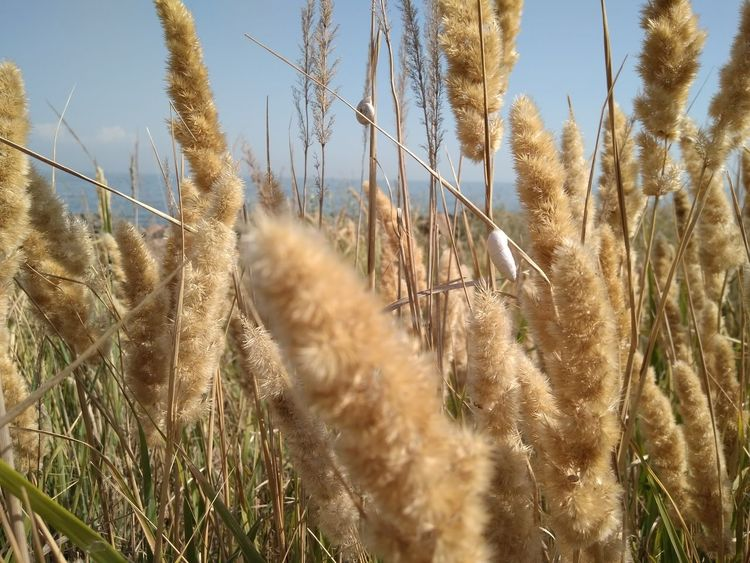 Growth Nature Plant Rural Scene Agriculture Cereal Plant Day Outdoors Field No People Sky Grass Beauty In Nature Close-up Freshness