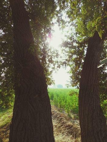 Indiaincredible Fieldsofgreen Field Trip! Rajasthan_diaries