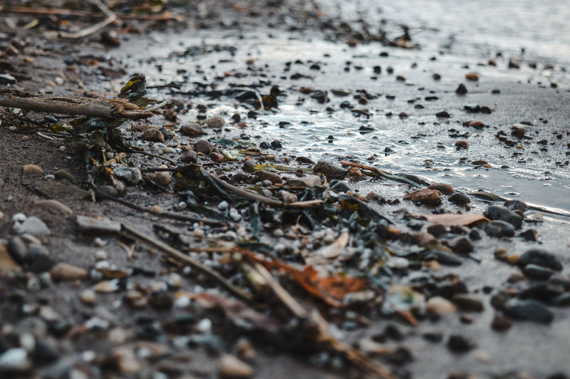 Close-up of dry leaves on wet street