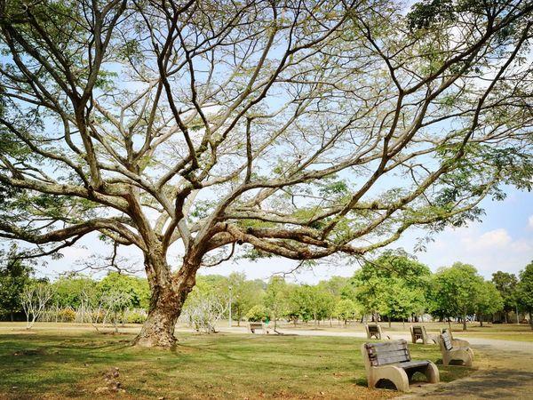 Nparks Nparksbuzz Bench Tree Landscape Scenics Tranquil Scene Nature Beauty In Nature
