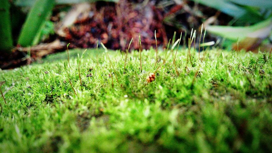 芽吹く A bud comes out. Hello World Moss Nagano