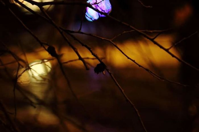 Showcase: February helios44m-4 Helios Nightphotography Bokeh Photography Bokeh Lights Branch Winter Lieto Finland