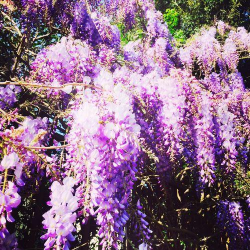 Enjoying Life Blossom Flowers Photooftheday Beautiful Hello World Sunshine ☀