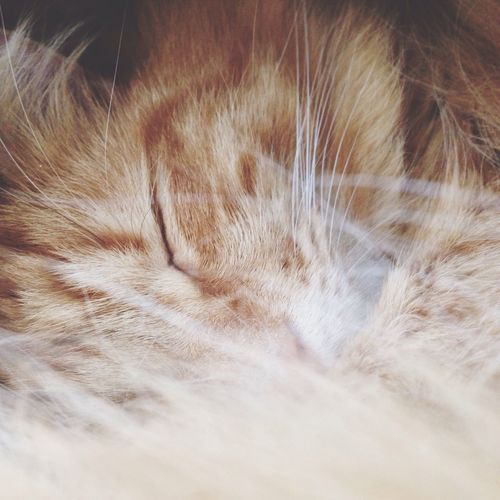 Cat Kitten Kitty Soft Softness Playful Playful Cat Ginger Cat Nature Close-up
