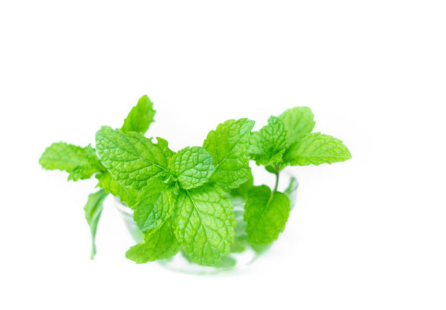 Close-up Food Freshness Green Color Healthy Eating Herb Herbal Medicine Ingredient Leaf Mint Mint Green Mint Leaf - Culinary Mint Leaves Nature No People Studio Shot Summer White Background