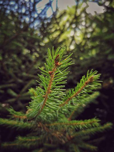 beauty tree