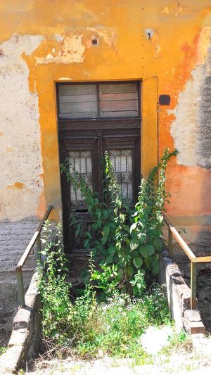 Ingrown Entrance Antiquated Brick Wall Building Closed Deterioration Door Entrance Entrance Gate Gateway House Ingrown Nature No People Obsolete Old Old Door Old Entrance Old House Outdoors Plant Residential Structure Run-down Weedy