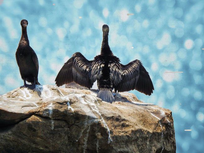 Animal Animal Themes Animal Wildlife Animals In The Wild Bird Cormorant  Day Group Of Animals Nature No People Outdoors Perching Rock Rock - Object Solid Spread Wings Vertebrate This Is Family