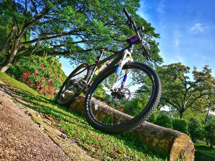 Tree Day Green Color Outdoors Growth No People Branch Low Angle View Nature Sunlight Sky Beauty In Nature Close-up cycling