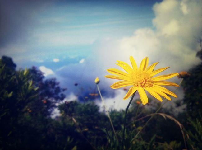 Vista del avila! Cielo Nubes Flores Natural