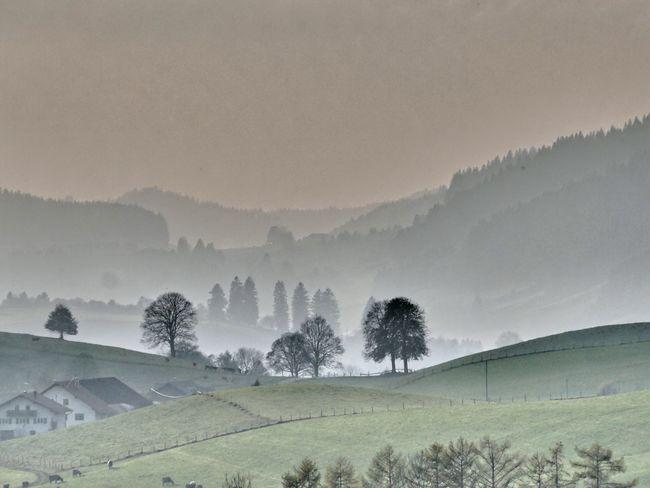 Nebel - Fog Allgäu Bayern Germany Beauty In Nature Bäume Fog Kalt Landscape Lanfschaft Mountain Nature Nebel No People Outdoors Panasonic DMC FZ1000 Tree Voralpenlandschaft