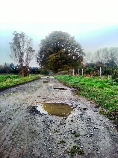 Back at home ... Tree Wet Nature No People Grass Sky Outdoors Day Rural Scene Tranquility Cloud - Sky Dirt Road New On Eyem Scenics Beauty In Nature