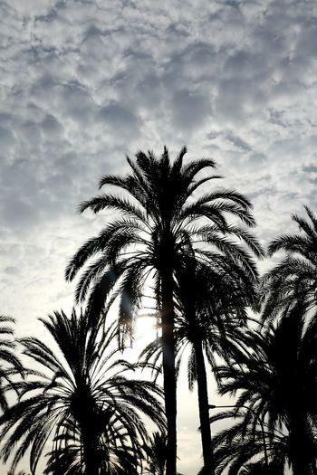 palms EyeEm