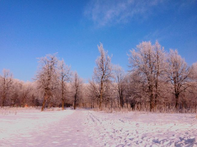 Moscow. Winter. Relaxing -10