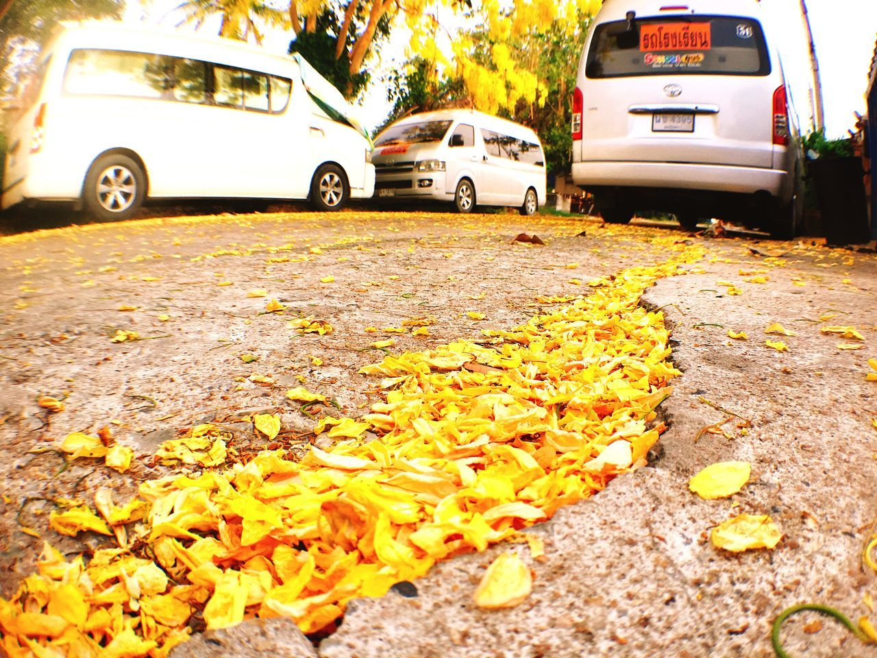car, land vehicle, transportation, leaf, mode of transport, autumn, change, street, yellow, day, stationary, outdoors, no people, road, nature, fragility, close-up