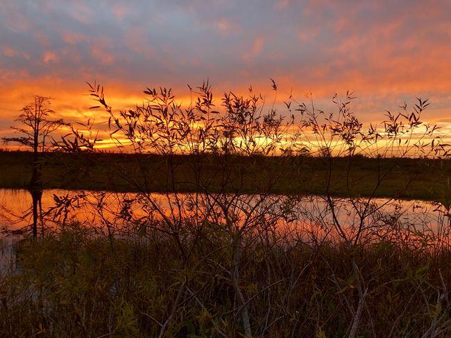 swamp sunset Louisiana Marsh Sunset Silhouettes Swamp Florida Sunrise Sunset Vibrant