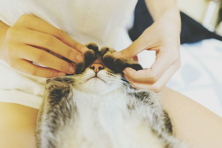 Midsection of owner massaging cat