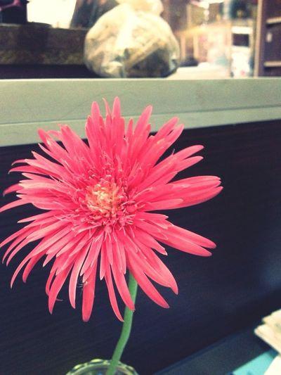 꽃, Flower