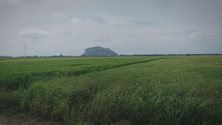 Agriculture Cloud - Sky Outdoors Paddy Fields At Alor Setar Malaysia Rice Paddy