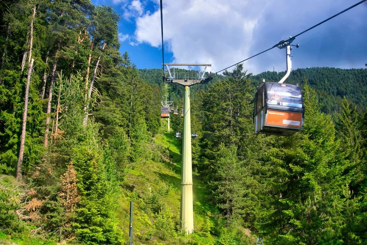 Overhead cable car in forest against sky