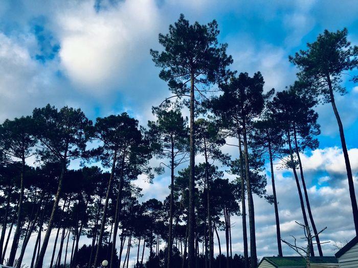 Treesssss Tree