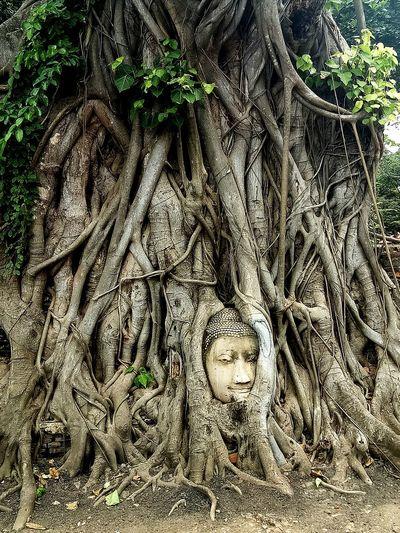 Watmahathat Ayutthaya Historic Park Ayutthaya | Thailand Lord Buddha Buddha Temple Thailand🇹🇭 Historical Monuments Temple Headbuddha Art