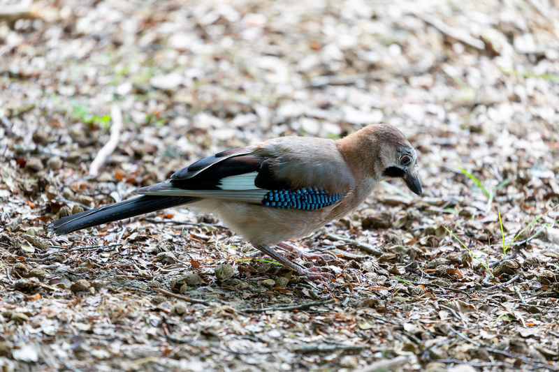 Side view of bird on land