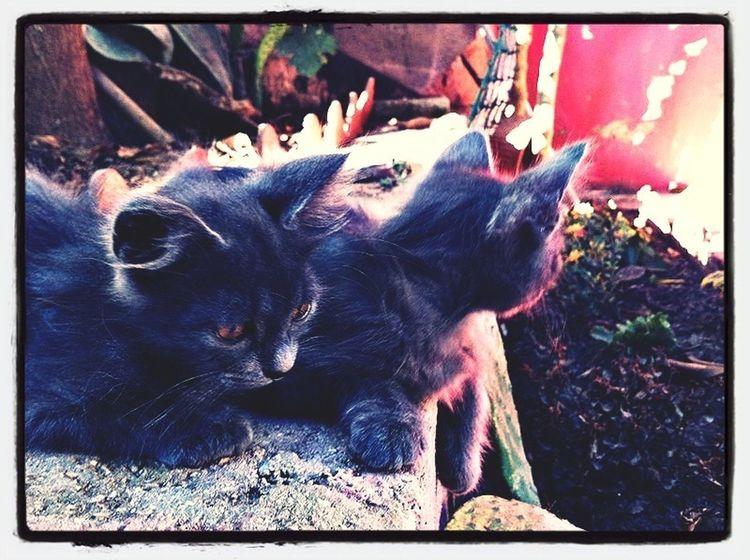 Gab & Luca Cats