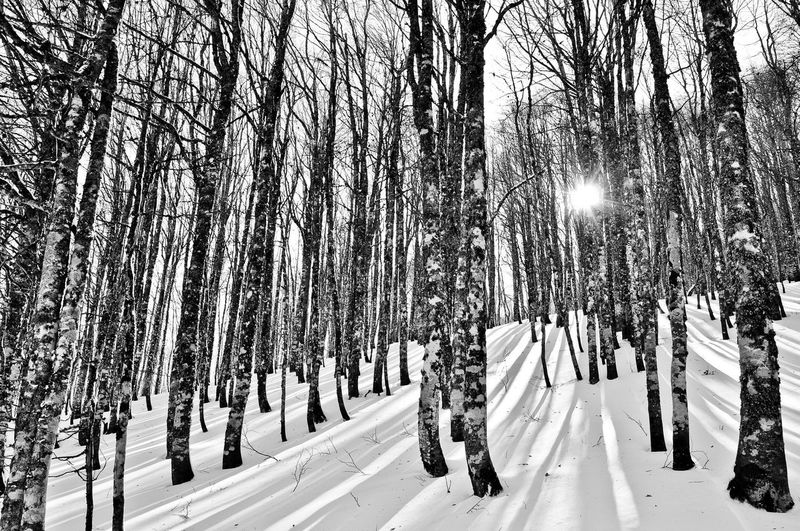 Shades Of Winter EyeEmNewHere Winter Sunlight Maxepersonalphoto Lifeinblackandwhite Lifeintechnicolor HDR Gennaio  Italia Landscape Blackandwhite Paesaggio Basilicata Lights EyeEm Best Shots EyeEm Best Shots - Nature Large Group Of People Snow Winter Day People Sunlight Cold Temperature Tree Nature Outdoors Sky HUAWEI Photo Award: After Dark Capture Tomorrow