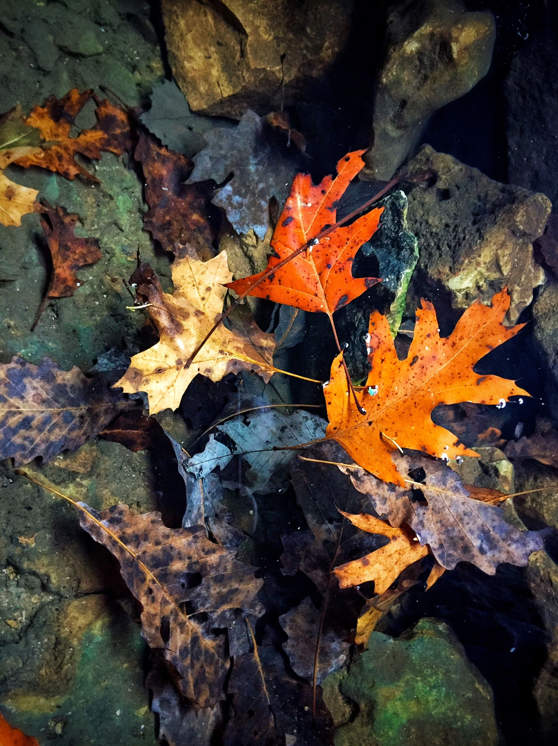 autumn, leaf, change, orange color, season, close-up, maple leaf, nature, dry, fallen, leaves, natural condition, natural pattern, high angle view, outdoors, textured, no people, day, yellow, fragility