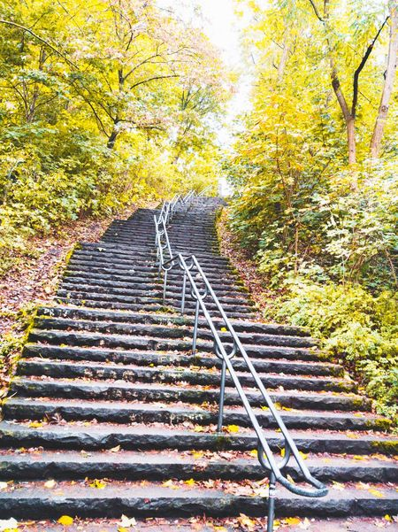 Calmness. Calm Before The Storm Steps Tree The Way Forward Steps And Staircases Growth Staircase Close-up Low Angle View Railing Nature Day Outdoors Repetition Tranquility Scenics Beauty In Nature Tranquil Scene Green Stairway Autumn Autumn Colors Autumn🍁🍁🍁 Always Go Up Berlin