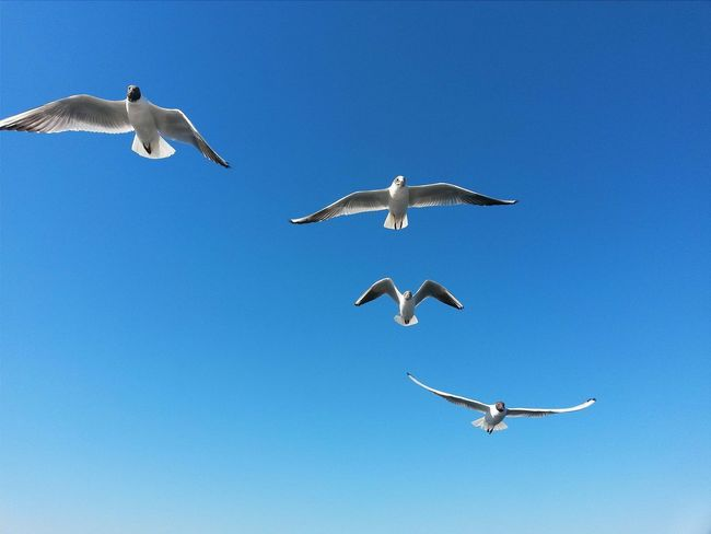Sky Gull Martı Photooftheday EyeEm Nature Lover Gününfotosu PicturePerfect EyeEm Best Shots VSCO Cam Blue