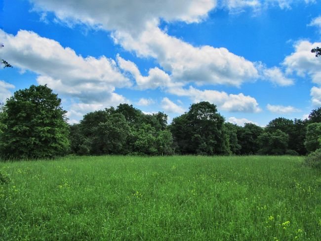 Eye4photography  Landscape Nature The Great Outdoors - 2016 EyeEm Awards Fieldscape Spring Clouds Forest Sky Trees Forest Photography Nature Photography Landscape_photography Clouds And Sky Field