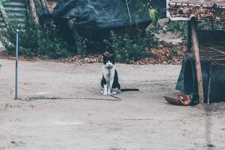 Prisoner cat sitting in park