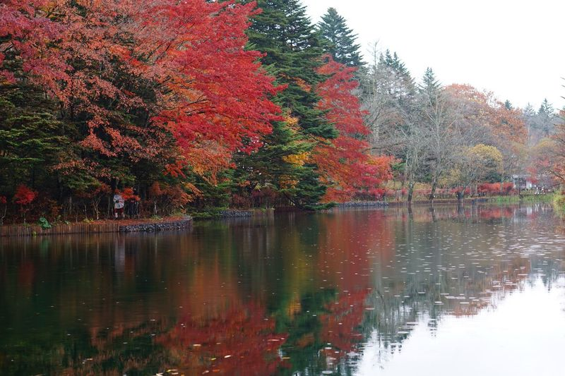 Forest Water Reflections Tree Plant Autumn Water Reflection Lake Tranquility Nature