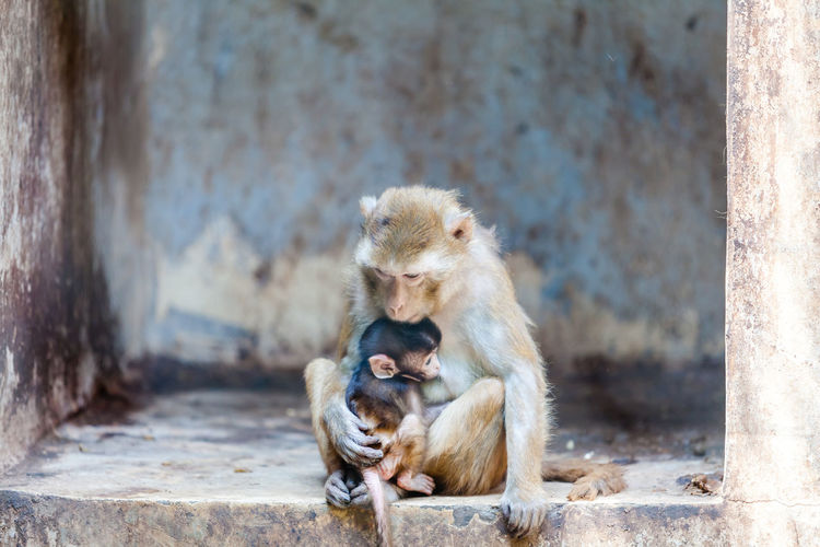 Animal Family Animal Themes Close-up Day Focus On Foreground Mammal Monkey Nature No People Outdoors Portrait Primate Relaxation Sitting Young Animal Zoo Market Reviewers' Top Picks