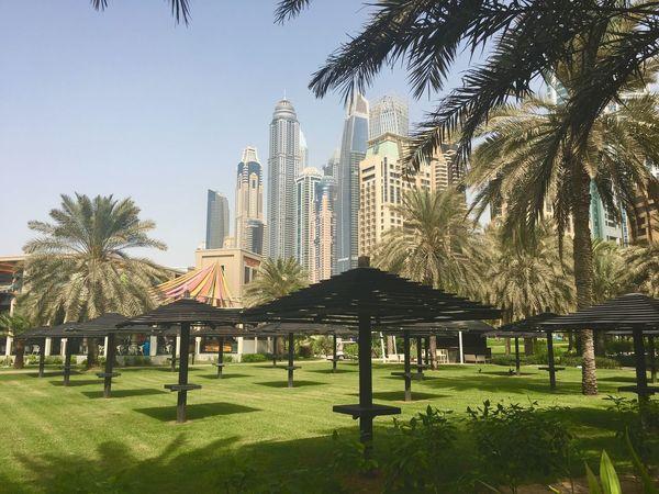 Dubai Tree Plant Built Structure Architecture Building Exterior Sky Nature Grass Building City Clear Sky Tower No People