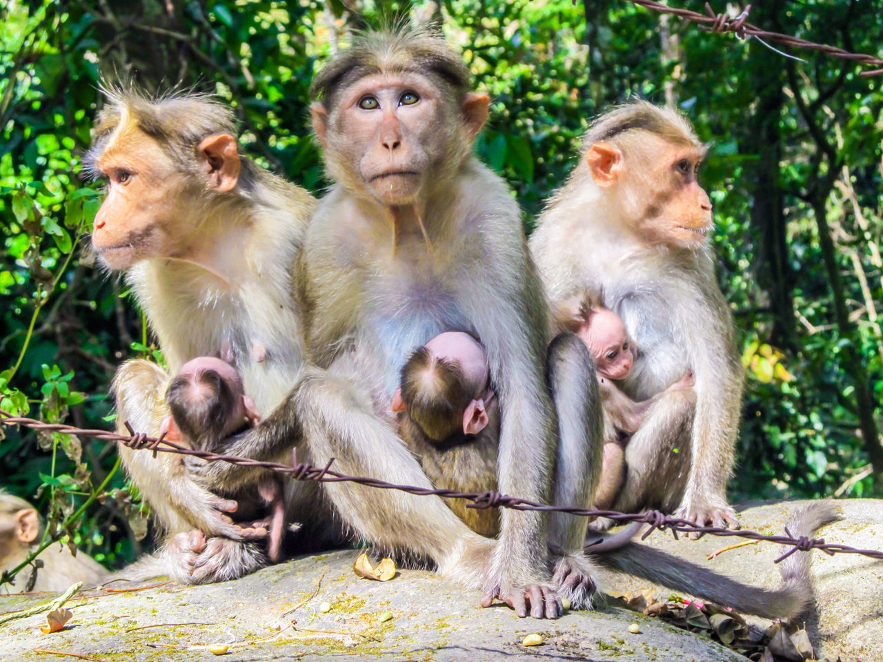 monkey, animal themes, primate, animals in the wild, young animal, animal family, animal wildlife, mammal, outdoors, infant, togetherness, day, sitting, nature, baboon, close-up, people