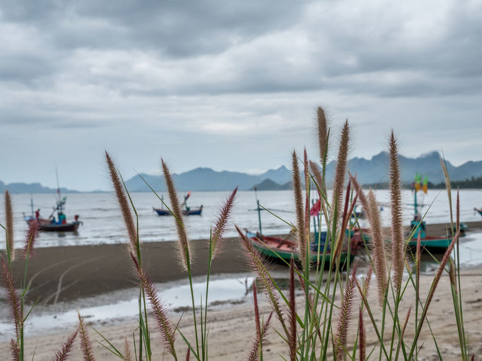 Selective focus at foreground, grass flowers. A beautiful in nature at seashore in fog and cloudy day. Emotion blurred background at beach, sea, mountain and sky. Grass Land Beach Beauty In Nature Cloud - Sky Fishing Floating On Water Flower Focus On Foreground Mountain Nature Nautical Vessel Outdoors Overcast Plant Sand Scenics - Nature Sea Seaside Ship Sky Tranquil Scene Tranquility Water Weed