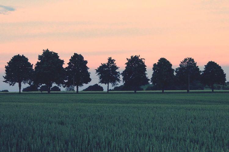 Eine Reihe Bäume und ein Feld in Altbransleben in Sachsen-Anhalt