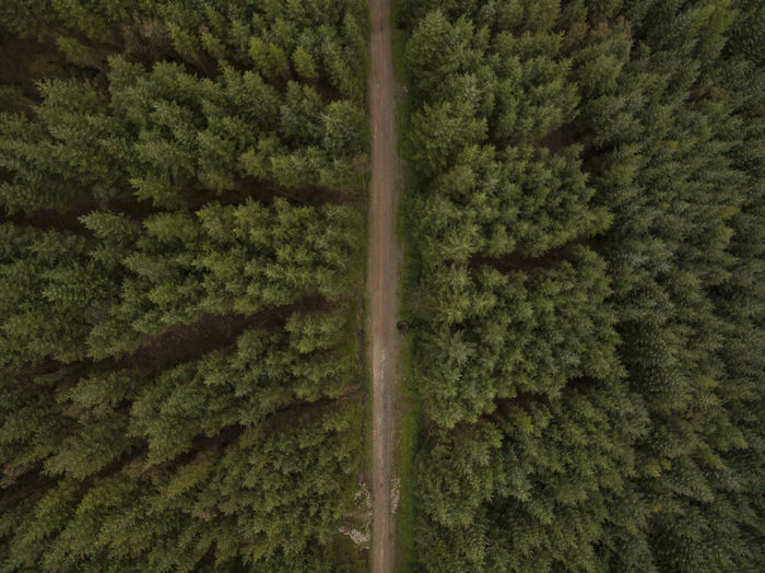 Aerial view of country road amidst pine trees in forest